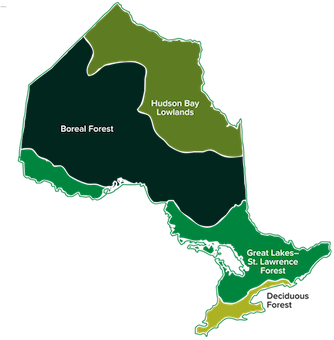Map of the 4 forest regions of Ontario