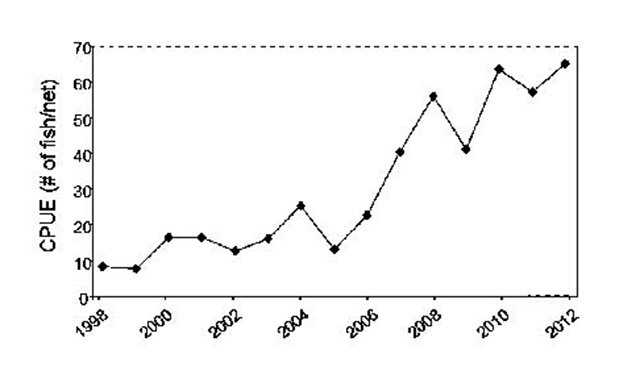 graph showing the rise in abundance of yellow perch from 1998 to 2012