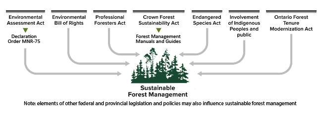 Ontario's policy framework for sustainable forest management
