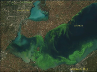 A Landstat-5 satellite image showing high turbidity plumes entering Lake Saint Clair through the mouth of the Thames River, and the influence of watershed inputs on water quality in Lake Saint Clair.