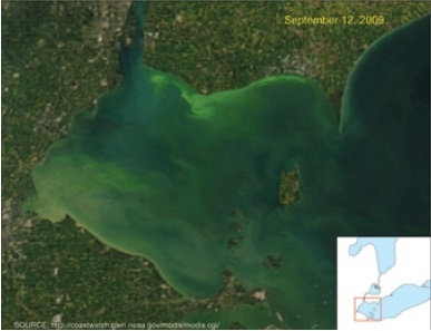 A landsat-5 satellite image of Lake Erie on October 5, 2011 showing the prevalence of blue-green algal blooms from the western to the central basin.