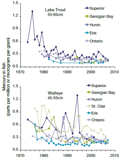 Two line graphs showing long-term trends of mercury levels in fish from the Canadian waters of the Great Lakes (data from Bhavsar and others, 2010, footnote reference 17).
