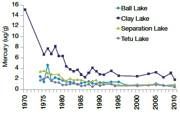 A line graph showing long-term trends of mercury levels (microgram per gram) in 50 centimetres Walleye from four representative lakes of the English-Wabigoon River.