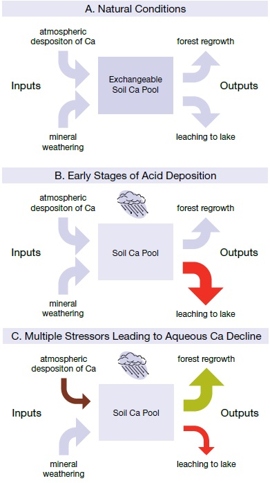 Three flow charts (a, b, and c) showing some factors leading to reduced calcium in watershed soil and, thus, lower calcium levels in softwater lakes. Chart a shows the effect of natural conditions. Chart b shows the early stages of acid deposition. Chart c shows multiple stressors leading to aqueous calcium decline.
