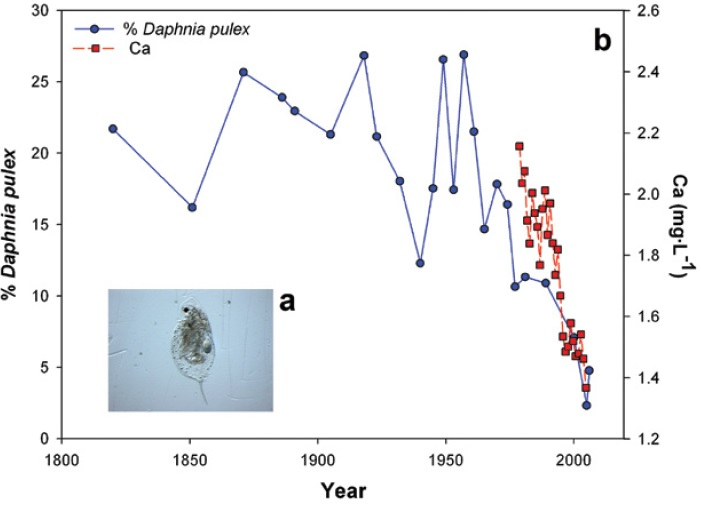 An image of a calcium-rich Daphnia and a line graph showing changes in the abundance of remains of a calcium-rich group of water fleas, the Daphnia pulex complex, relative to other zooplankton. Modified from a version presented in Jeziorski and others, 2008, footnote reference 53.