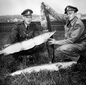 black  and white photo of conservation officers with muskellunge seized from poachers on Lake Simcoe.