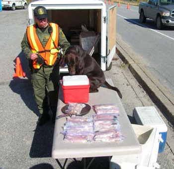 colour photo of a dog assisting in a fishery enforcement activity.