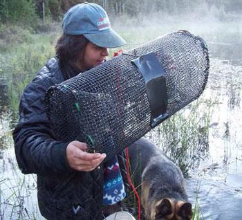 colour photo of a bait dealer/harvester.