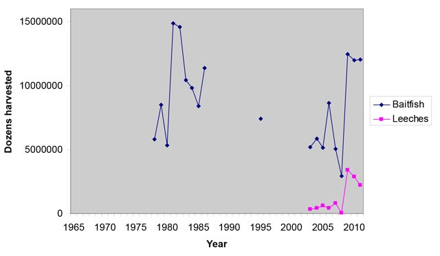 Line graph showing reported harvests of leeches and baitfish in Ontario from 1970 to 2011, with the vertical axis showing dozens harvested. Baitfish harvests are represented by dark blue dots connected with a line, and leeches are represented by pink dots connected with a line.