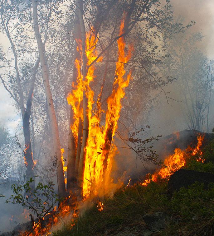 Intermittent crown fire