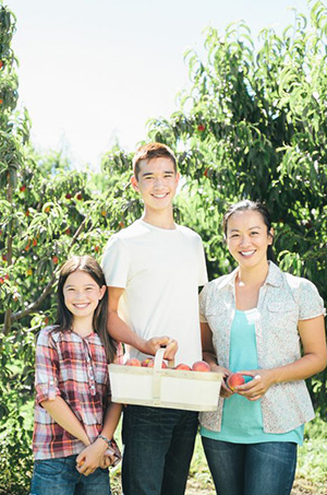 A daughter, son and mother in an orchard on a sunny day holding a basket of peaches.