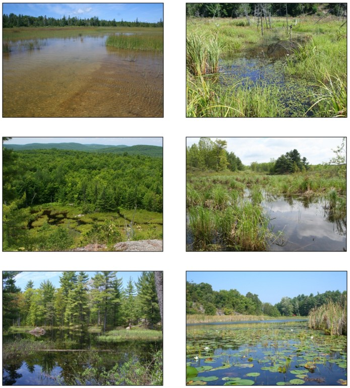 Six photographs showing examples of the Blanding's Turtle habitat in Ontario