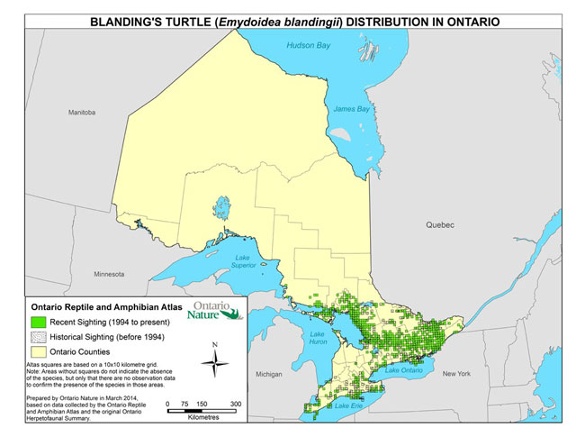 Map showing the known distribution of the Blanding's Turtle in Ontario based on recent and historical sightings data from the OMNRF and the Ontario Reptile and Amphibian Atlas. Recent sightings (1994 to present) are highlighted in green, historical sightings (before 1994) are shown as dots, and Ontario counties are shown in yellow. The map shows that the majority of sightings (both recent and historical) are located in the southern part of Ontario, with most of the sightings shown in the south-central to south-eastern part of the province. Map prepared by Ontario Nature in March 2014.