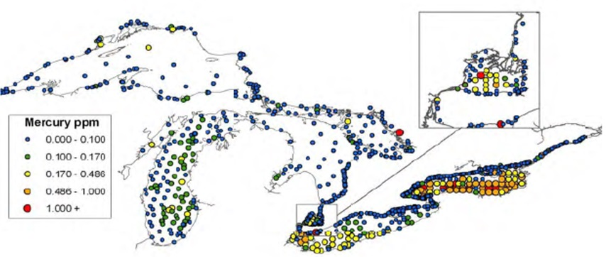 Figure 4: This figure shows the concentrations of mercury in parts per million in surface sediments from all the Great Lakes in 2011. Mercury was detected at higher than 1000 parts per million in Lake Ontario, Lake Saint Clair and Lake Huron.