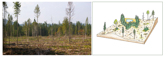 Clearcut system
