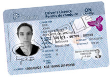 Sample driver's licence