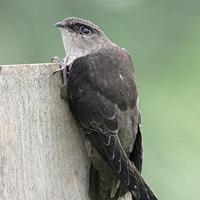 Species At Risk In Ontario Ontario Ca