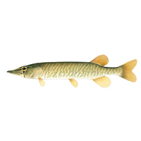 grass-pickerel
