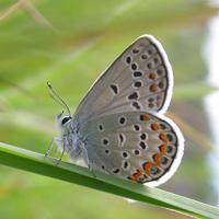 melissa-bleu