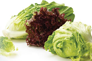 Boston Bundle Salad