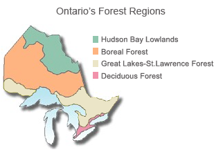 Forest regions | Ontario.ca