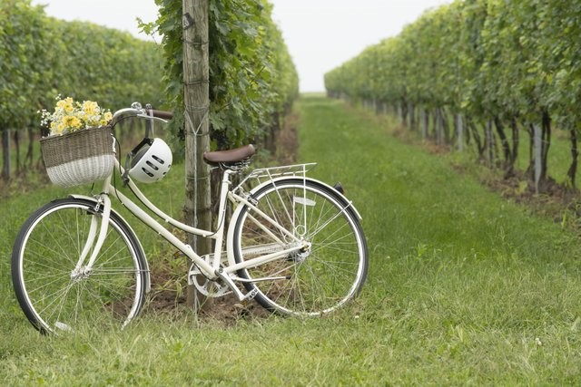 Photograph of a bicycle leaning against a trellis at Viewpoint Estate Winery at Harrow
