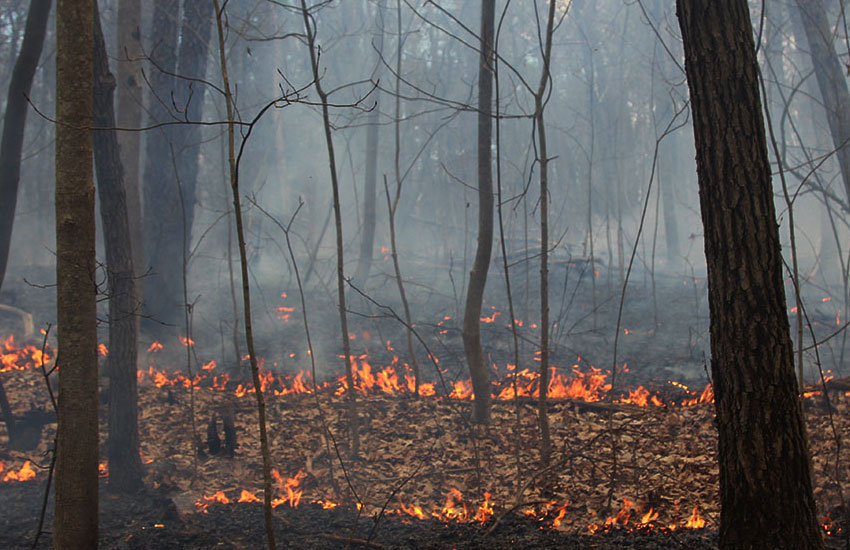 surface fire