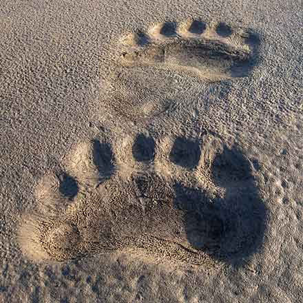 photo of bear tracks in the sand