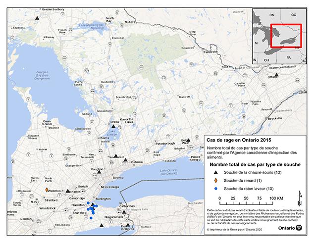 Carte de l'Ontario montrant la provenance des 24 cas confirmés de rage dans la province en2015. Voici les provenances et les espèces atteintes : rage de la chauve-souris (13) – Durham, Simcoe, Sudbury, Ottawa-Carleton, Hamilton, York, Waterloo, Hamilton, Haldimand-Norfolk, Hastings, Niagara et comtés de Peel; rage du raton-laveur (10) : Hamilton et comtés de Haldimand; cas confirmé d'une vache atteinte de rage du renard (1) : comté de Perth.