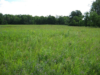 A photo of grassland habitat surrounded by trees. A variety of grasses and wild flowers are present in an area approximately the size of a football field.