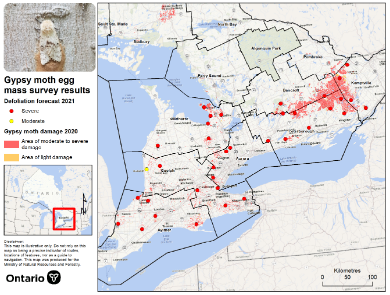 Map of Southern Ontario showing distribution of projected 2021 gypsy moth defoliation.