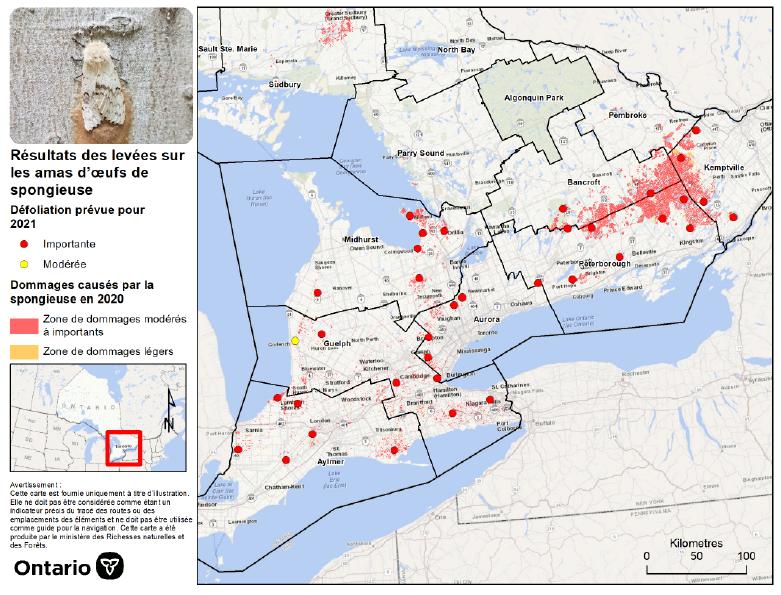 Carte du sud de l'Ontario illustrant les prévisions de défoliation pour 2021.
