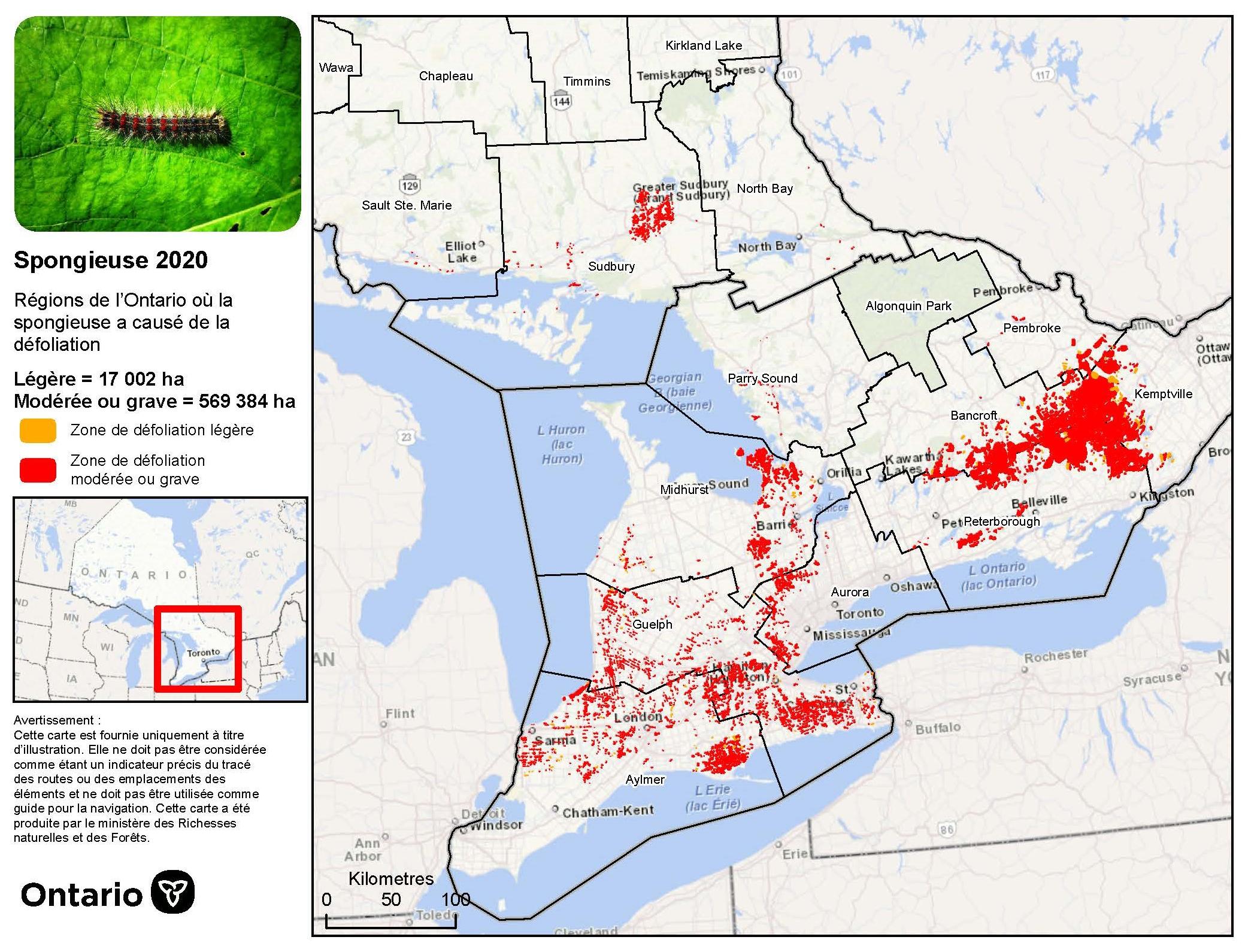 Carte du nord-est et du sud de l'Ontario illustrant les zones défoliées par la spongieuse au nord-ouest de Sudbury, le long de la rive nord du lac Huron ainsi que dans une grande partie du sud de l'Ontario.