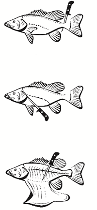 Image of fish being filleted in three steps