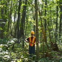 Photo d'un chercheur forestier surveillant l'état de santé de nos forêts. (Photo : ministère du Développement du Nord, des Mines, des Richesses naturelles et des Forêts)