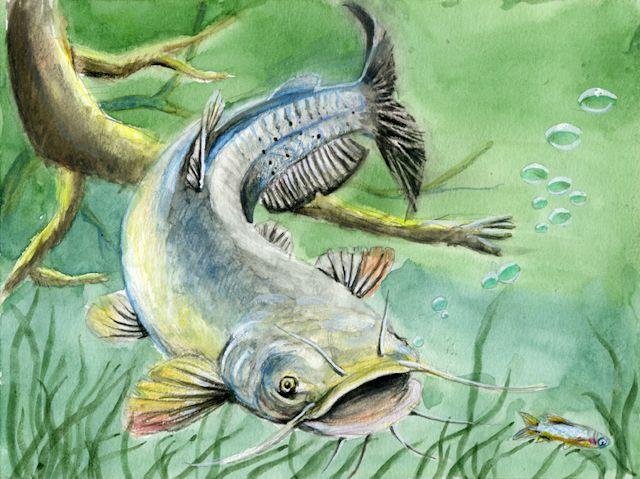 Kids' Fish Art Contest | Ontario ca