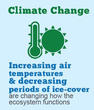 This infographic shows that increasing air temperatures and decreasing periods of ice-cover are changing how the ecosystem functions.