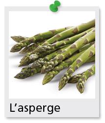 L 39 asperge ontario terre nourrici re - Culture de l asperge ...