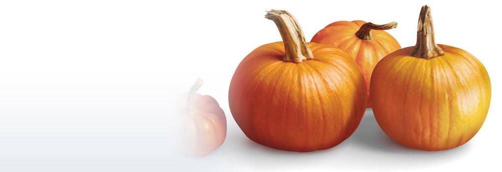 pumpkin cranberry muffin squares foodland ontario