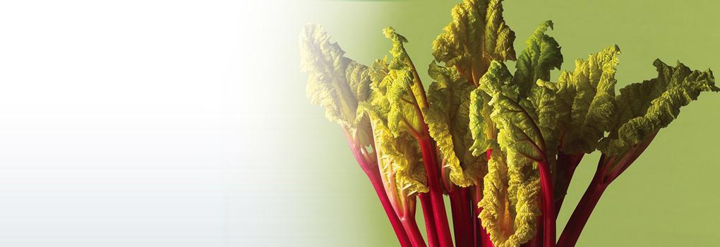 Rhubarb Foodland Ontario