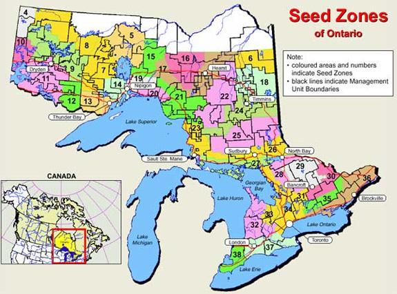 Buy ontario tree seeds or cones for Gardening zones ontario
