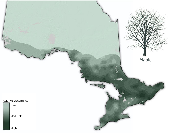 Types Of Ontario Wood Ontario Ca